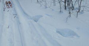 Глух из снега